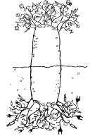 01. A Árvore dos Mil Anos